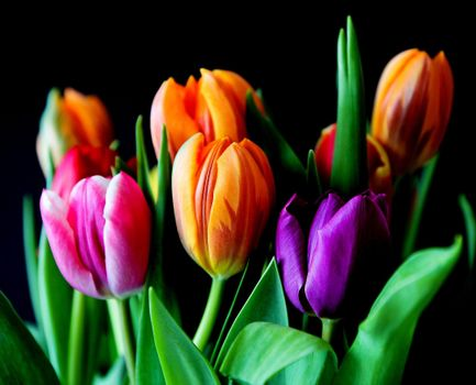 Download photos flowers, flora
