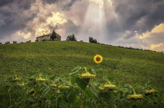 Заставки Итальянский пейзаж,италия,поле,холм,подсолнухи,дом,небо,пейзаж