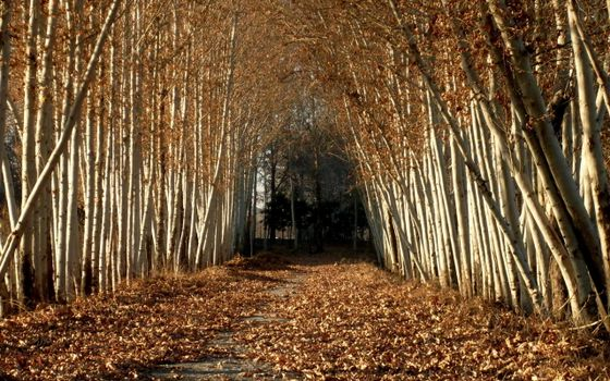 Photo free autumn, leaf fall, path