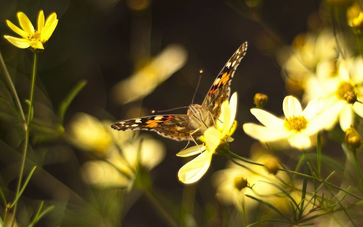 Free photo butterfly, antennae, wings, pattern, color, paws, flowers - to desktop