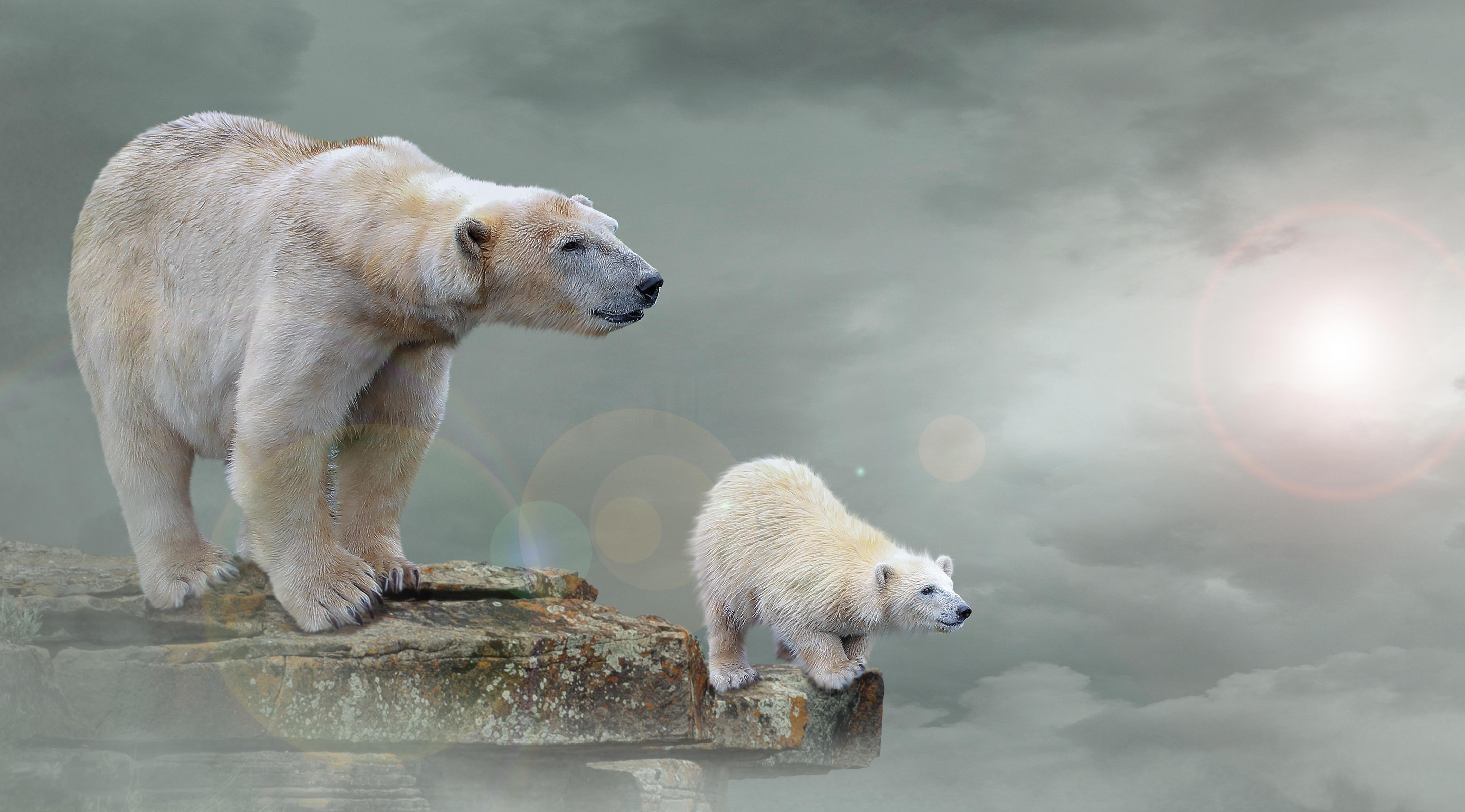 Обои белый медведь, полярный медведь, арт