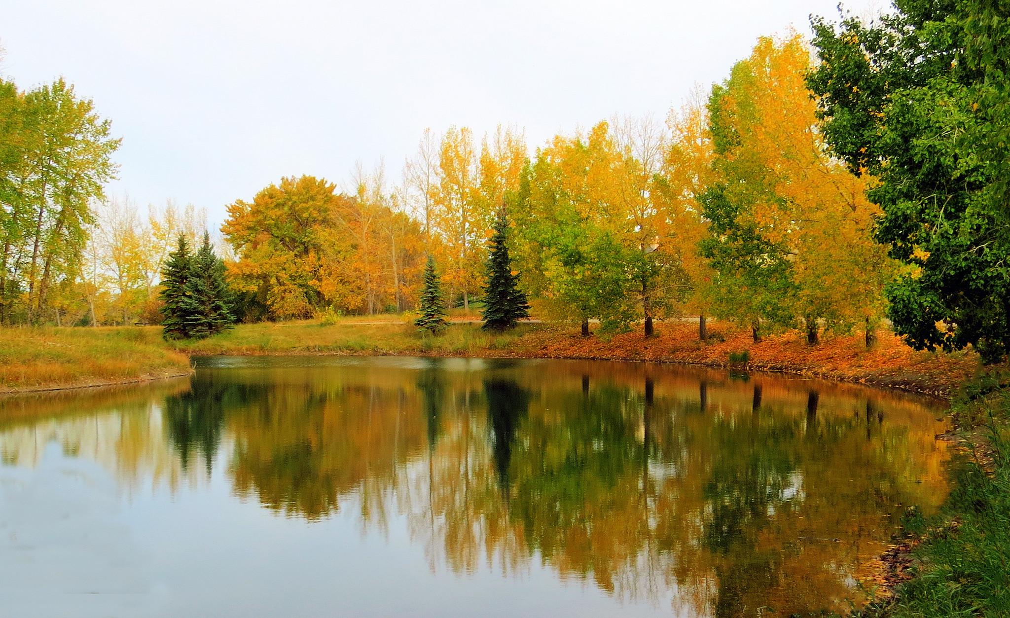 обои река, осень, деревья, пейзаж картинки фото