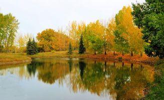 Фото бесплатно река, осень, деревья
