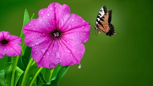 Бесплатные фото Розовые цветы,бабочка,природа,капли воды