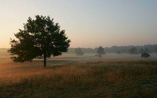 Заставки утро, поле, трава, деревья, дымка, небо