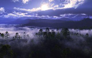 Бесплатные фото долина,деревья,туман,горы,облака,солнце