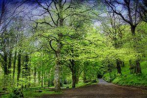 Бесплатные фото дорога, лес, деревья, пейзаж