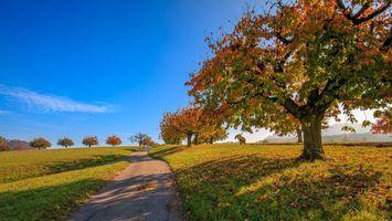 Бесплатные фото осень, поле, дорога, деревья, пейзаж