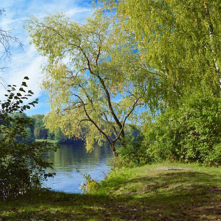 Обои березы, деревья, природа картинки на телефон