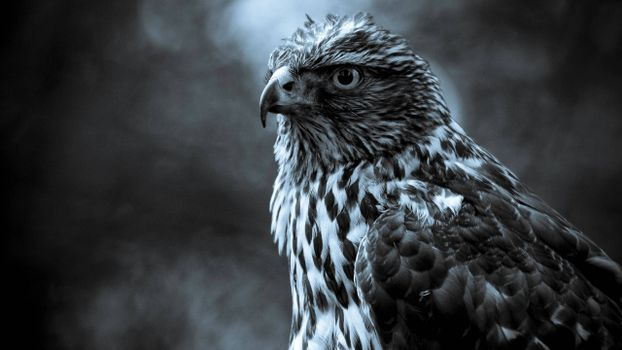 Photo free feathers, falcon, eyes