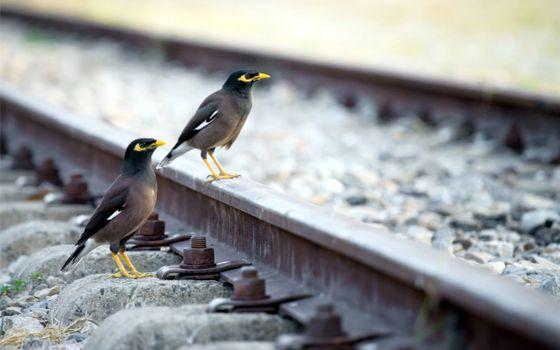 Фото бесплатно железная дорога, птицы