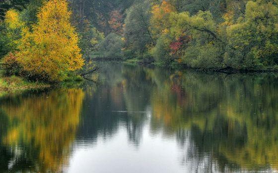 Фото бесплатно река, кустарник, деревья
