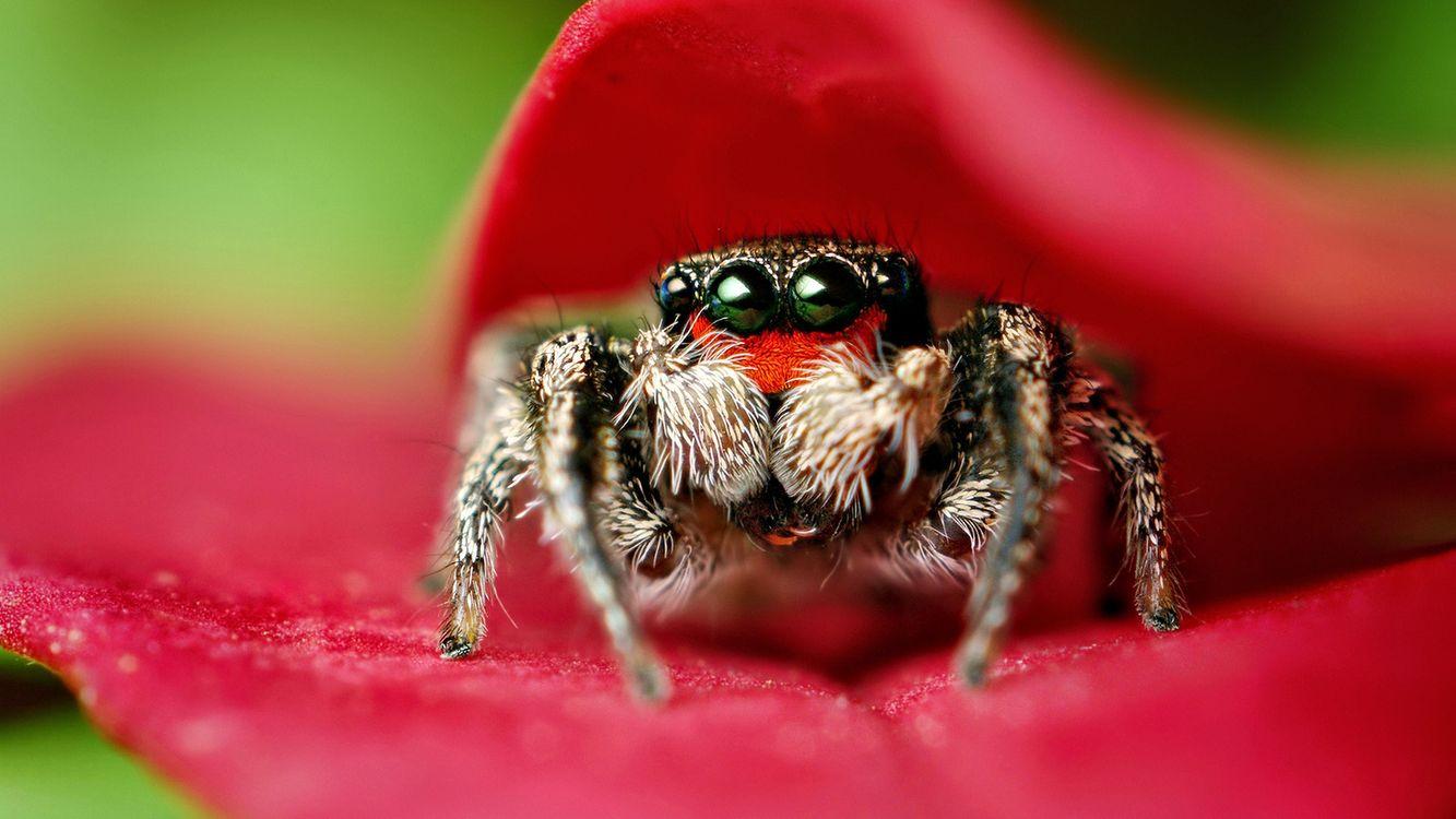 Фото бесплатно лепестки, красные, паук - на рабочий стол