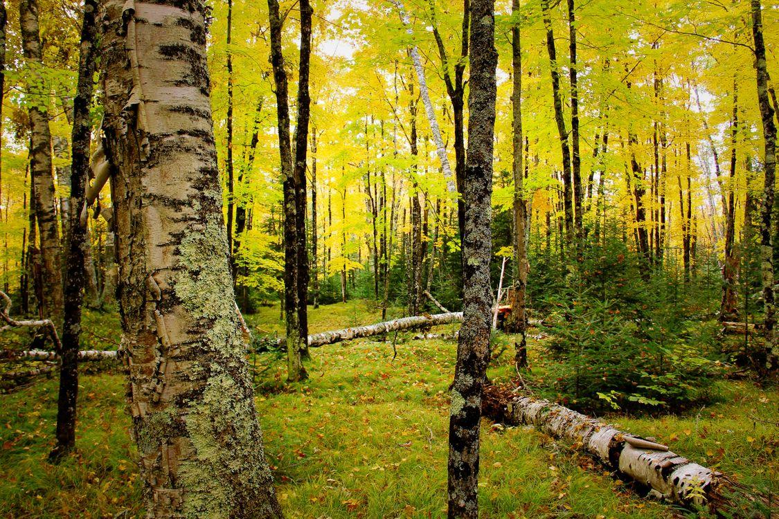Фото бесплатно осень, лес, деревья, природа, природа