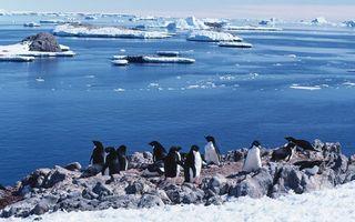 Бесплатные фото пингвины,стая,клювы,ласты,камни,лед,море