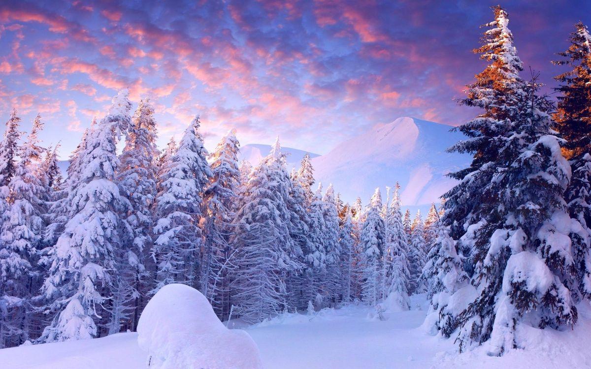 Фото бесплатно зимний лес, сугробы, елки, гора, пейзажи