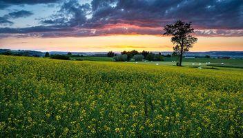 Бесплатные фото закат, поле, цветы, деревья, пейзаж
