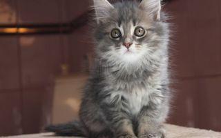 Фото бесплатно пушистый, хвост, котенок