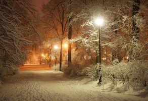 Бесплатные фото парк,зима,дорога,деревья,фонари,пейзаж