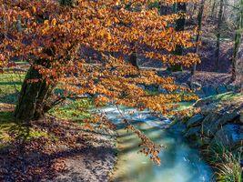 Бесплатные фото осень,река,лес,деревья,природа
