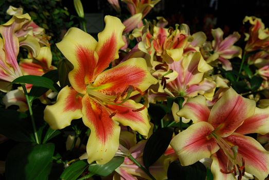 Бесплатно цветы, флора скачать фотографию
