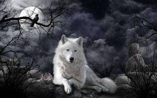 Бесплатные фото ночь,луна,волк,art