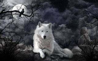 Фото бесплатно ночь, луна, волк