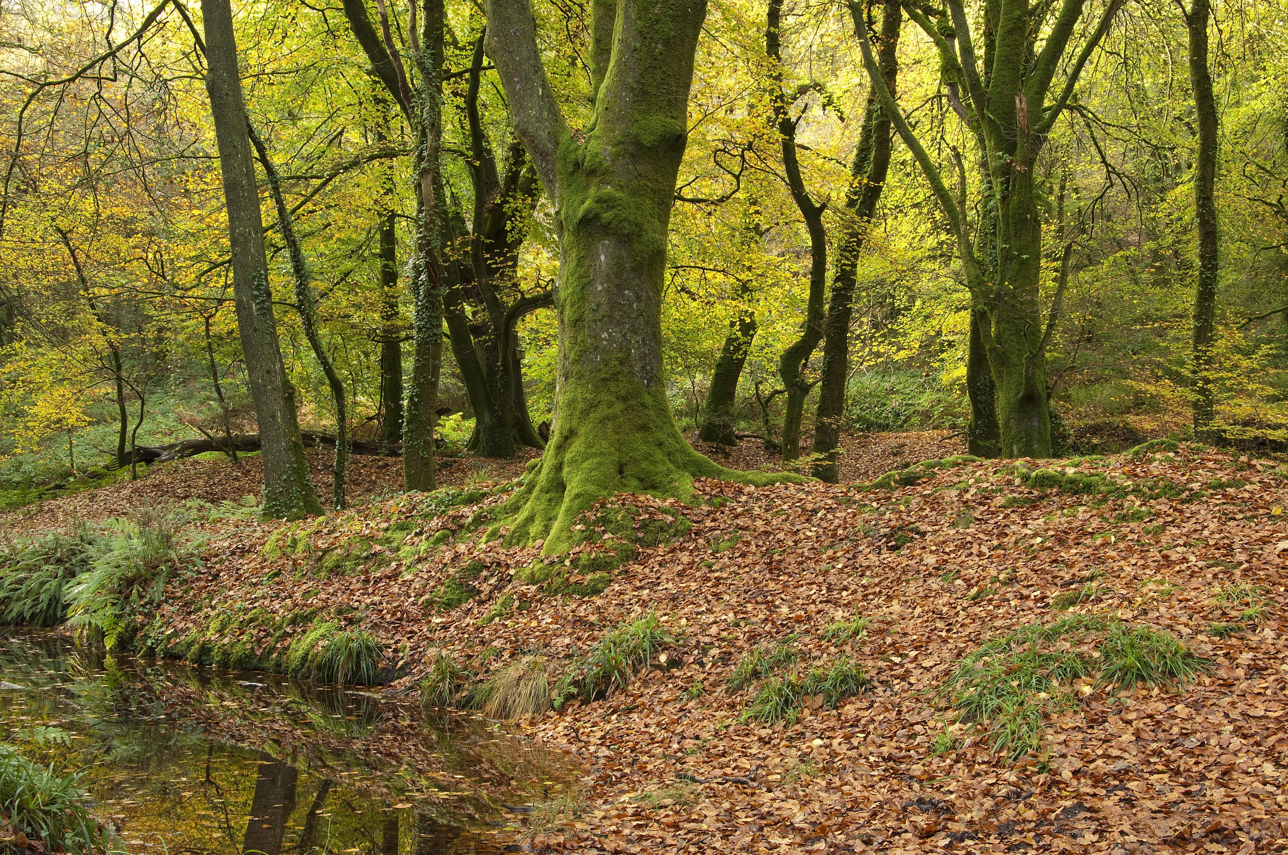 обои осень, лес, деревья, водоём картинки фото