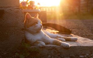 Бесплатные фото кот,отдыхает,фундамент,солнце,лучи,улица
