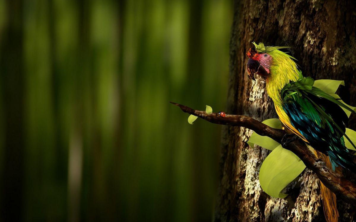 Фото бесплатно попугай, клюв, перья - на рабочий стол