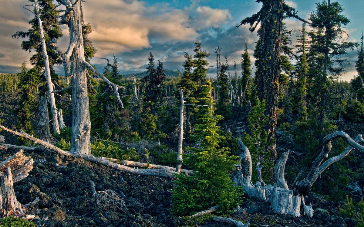 Фото бесплатно лес, деревья, бурелом, коряги, небо, облака, природа - скачать на рабочий стол