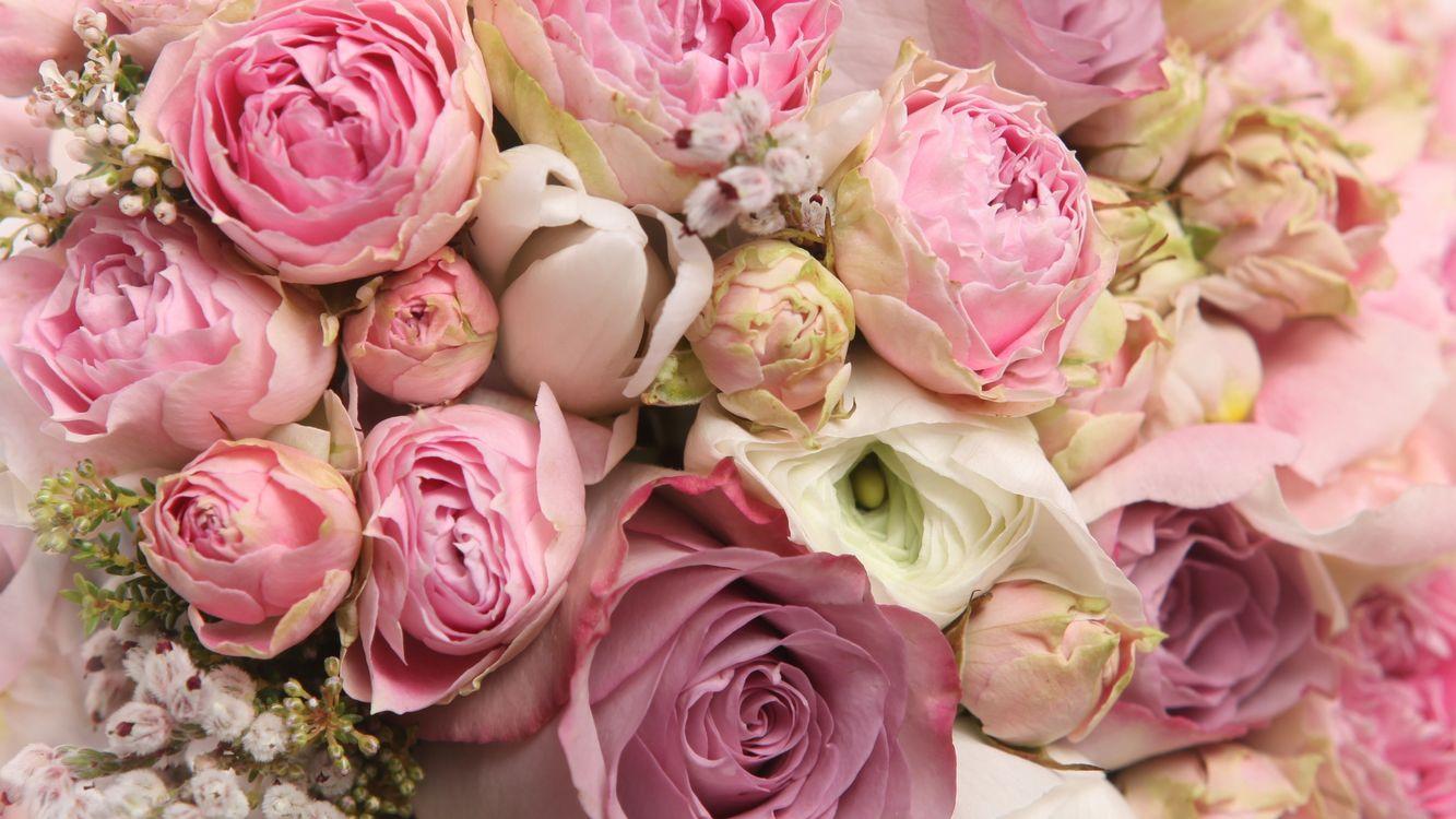 Фото бесплатно розы, лепестки, бутоны, букет, розовые, цветы