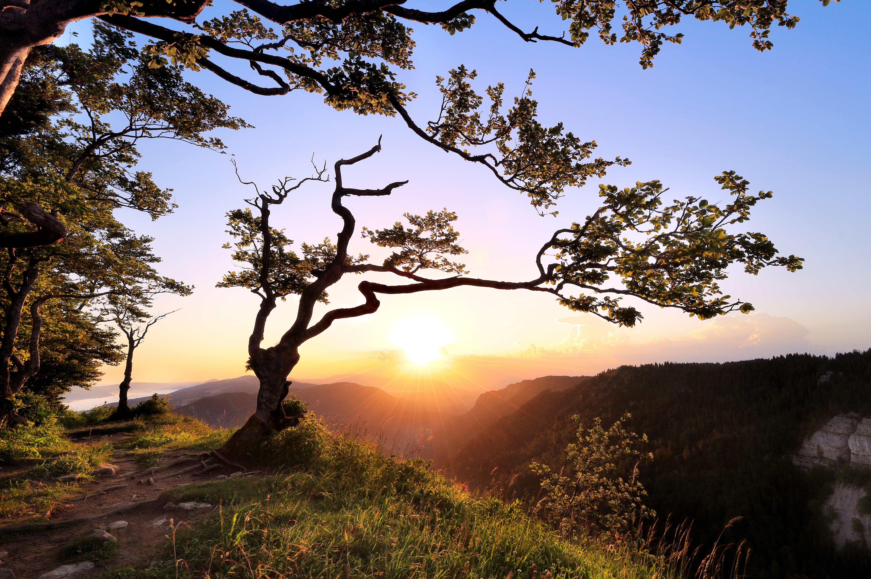 закат горы деревья бесплатно