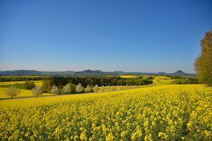 Фото бесплатно поле, цветы, дорога