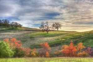 Бесплатные фото закат,поле,холмы,осень,деревья,пейзаж