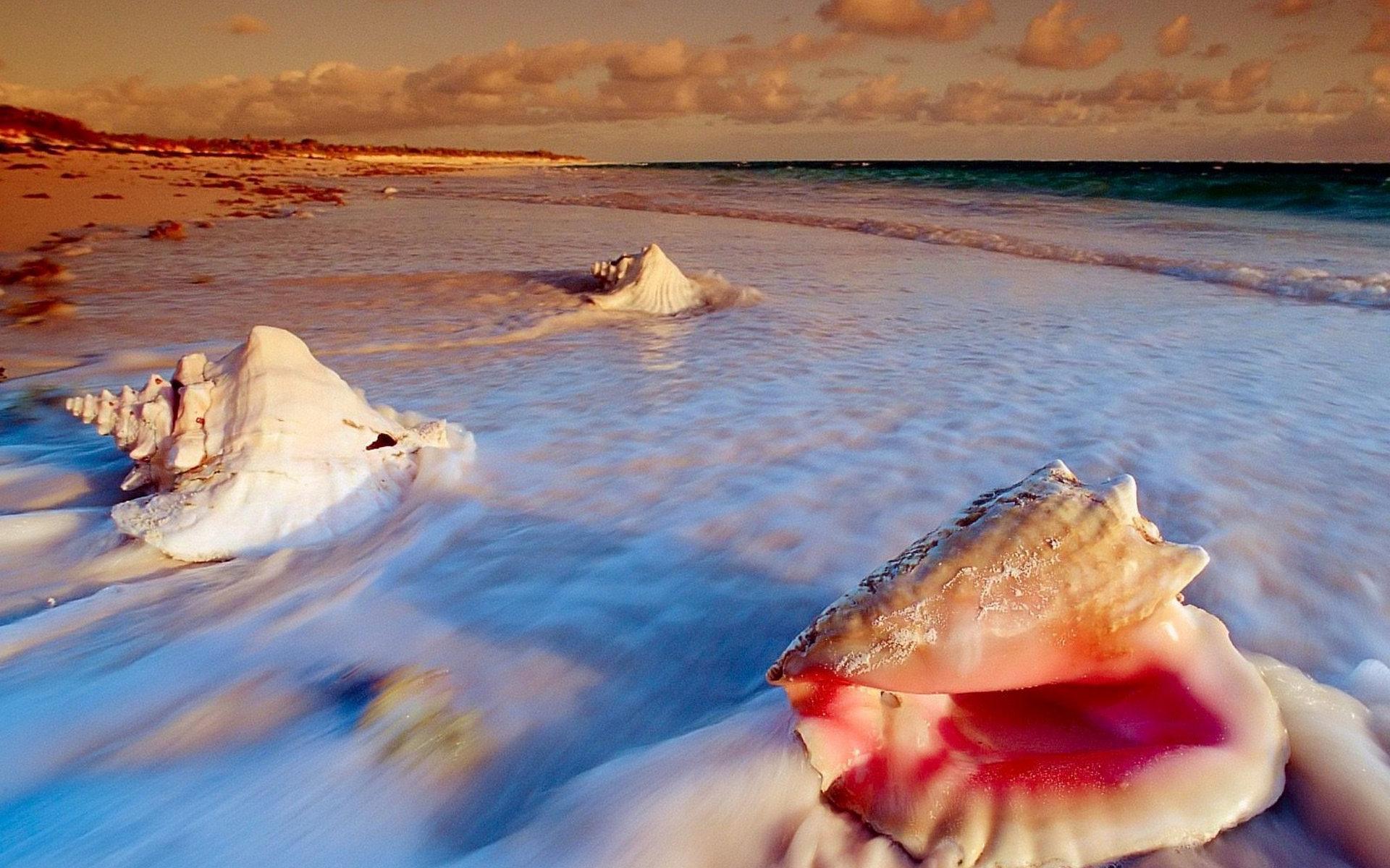 Ракушка на берегу море без смс