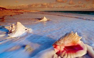 Бесплатные фото берег,песок,ракушки,море,волны,пена,горизонт