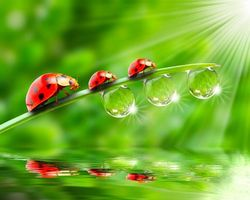 Photo free dew, macro, greens