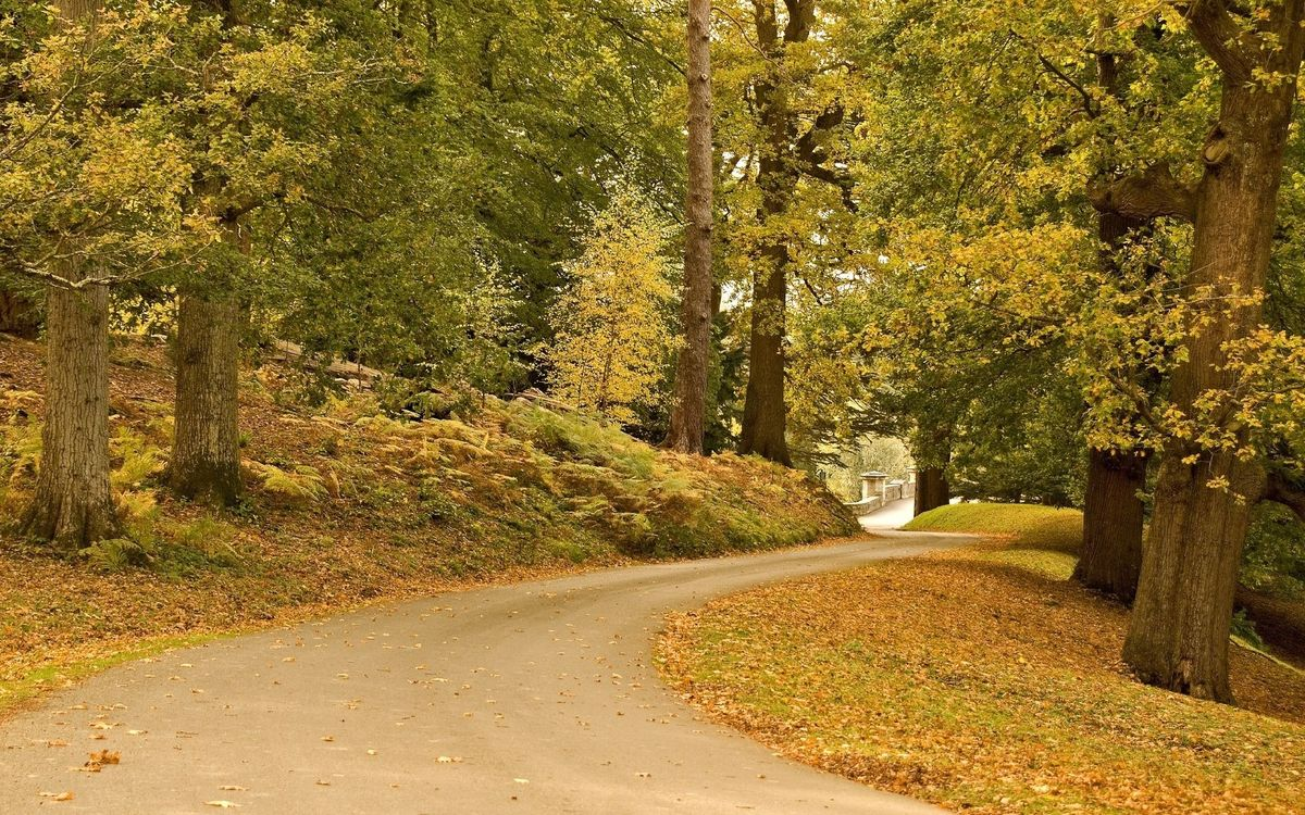 Free photo autumn, road, grass, trees, foliage - to desktop