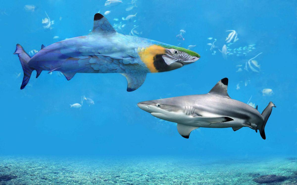 Фото бесплатно фотошоп, море, акулы, рендеринг