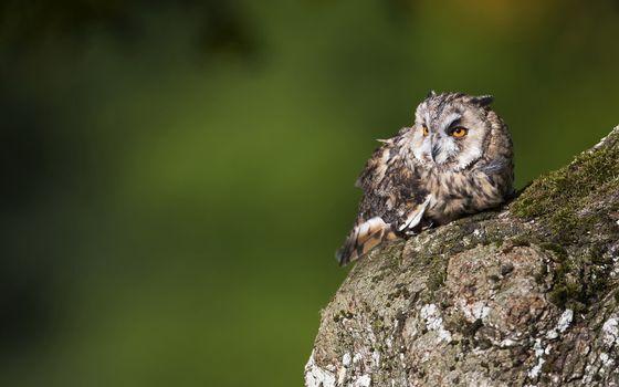 Бесплатные фото сова,глаза,оранжевые,перья,камень,мох