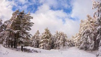 Бесплатные фото Viherkallio,Espoo,Finland,зима,снег,сугробы,деревья