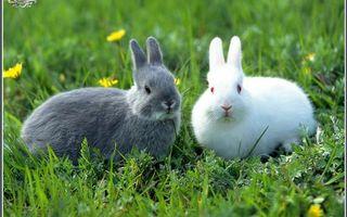 Бесплатные фото кролики,глаза,уши,шерсть,трава,одуванчики