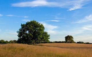 Заставки лето, поле, трава, деревья, небо, облака