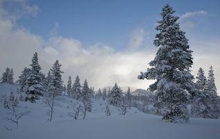 Заставки зима,снег,деревья,сугробы,пейзаж
