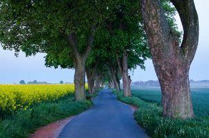 Заставки дорога, поле, деревья, пейзаж