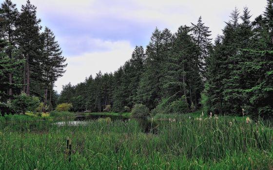 Фото бесплатно лес, болото, заводь