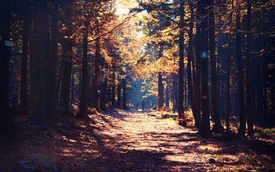 Бесплатные фото бор,деревья,дорожка,люди,солнце лучи