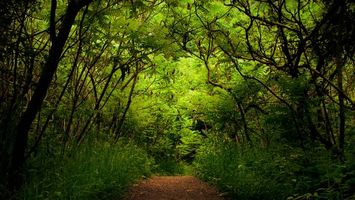 Фото бесплатно лето, тропинка, трава