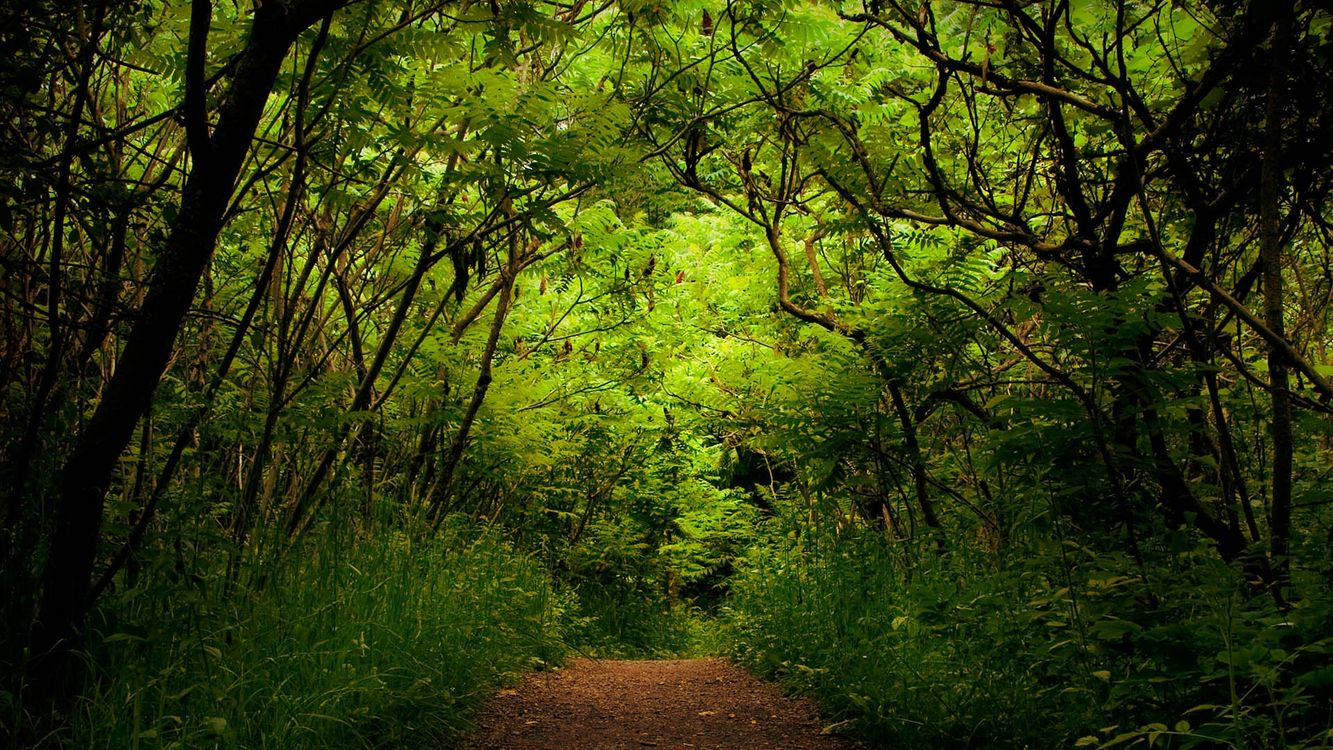 Фото бесплатно лето, тропинка, трава, лес, деревья, заросли, природа - скачать на рабочий стол